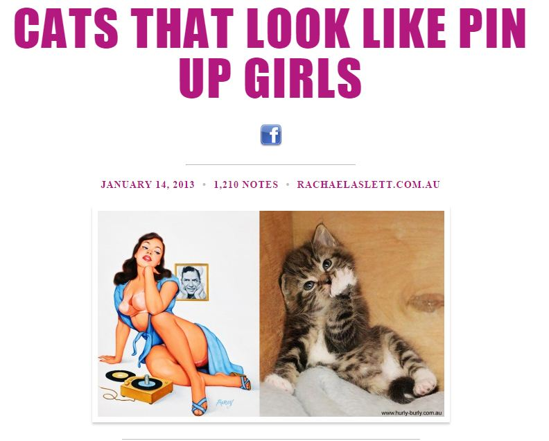 cats that look like pinup girls tumblr